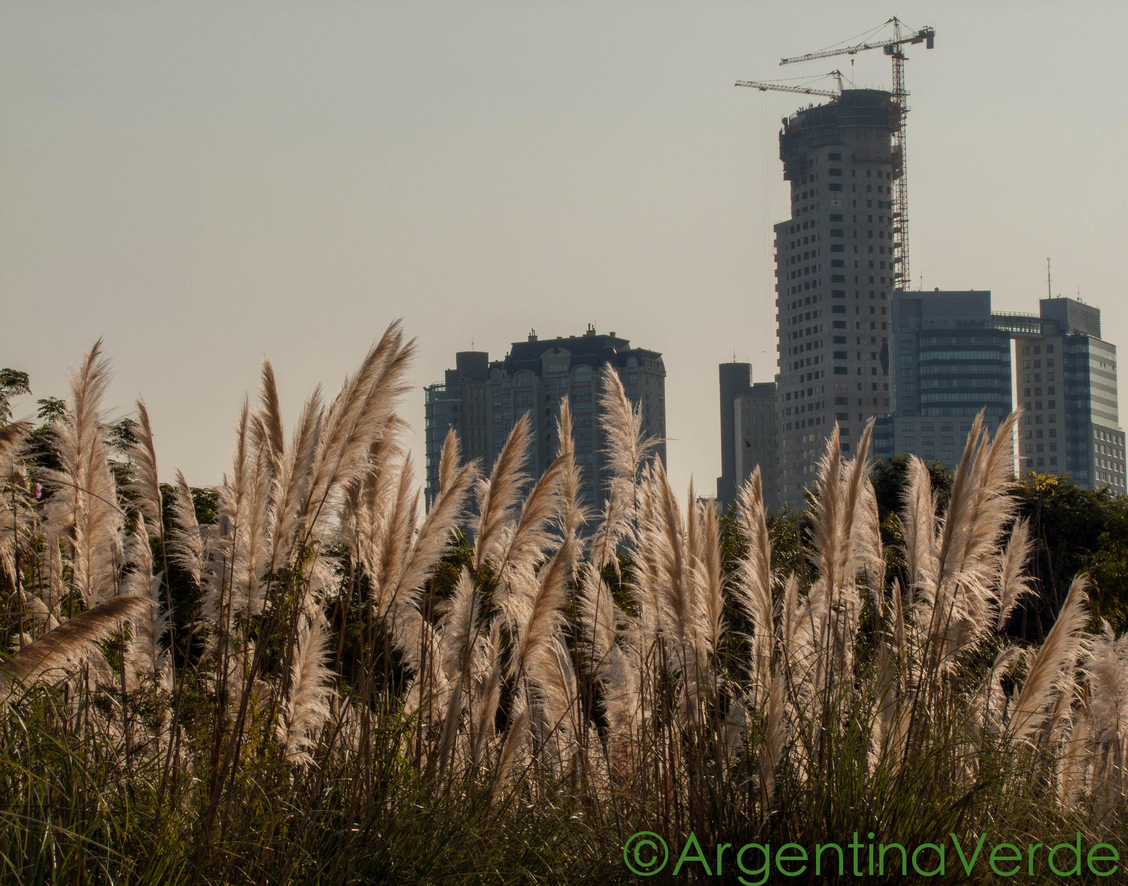 Argentina Verde